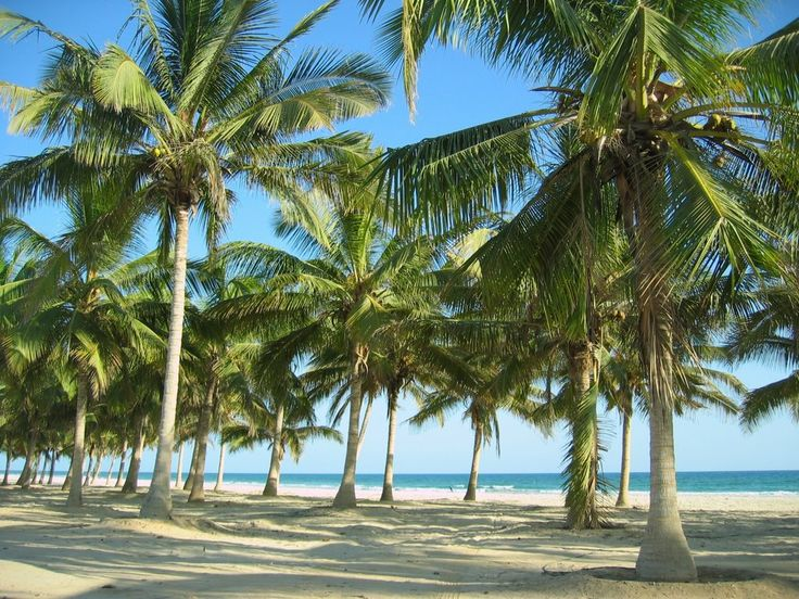 Salalah Beach Oman 11 (1024x768)