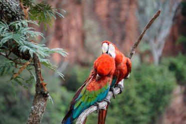 Reisebericht über das Tierparadis im brasilianischen Pantanal.