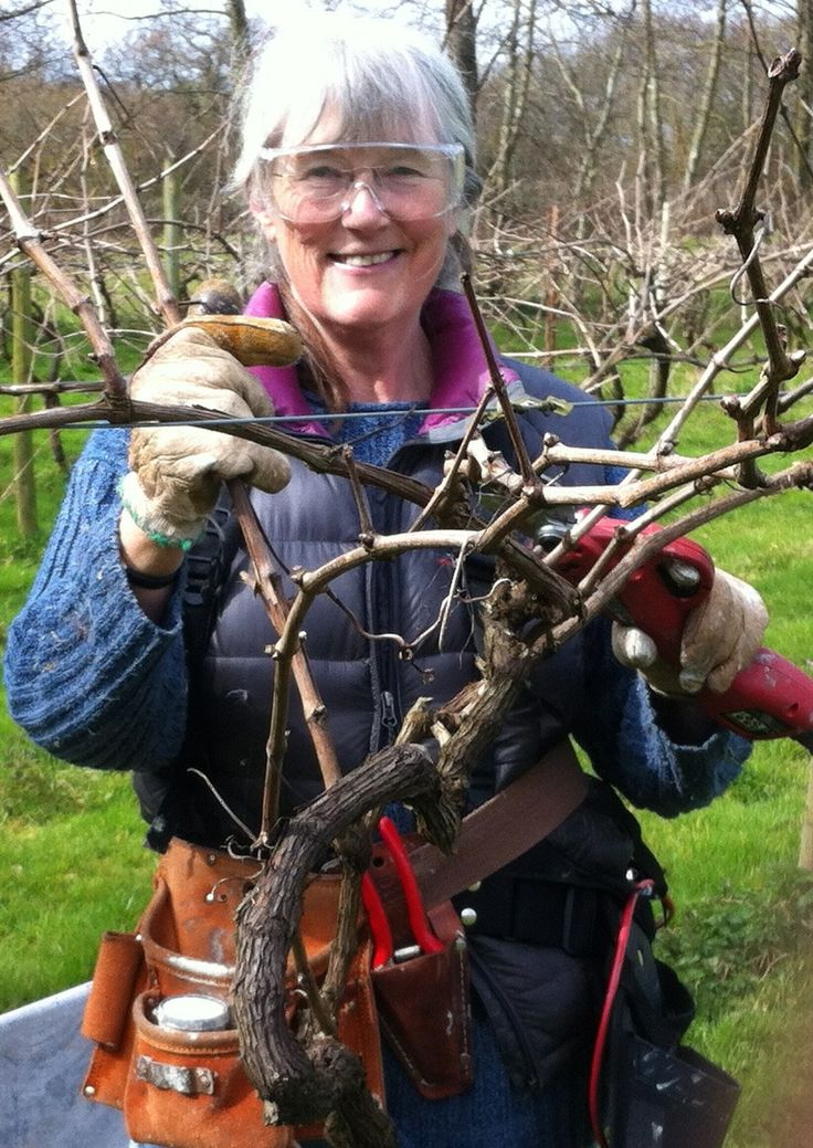 Pruning with Max electric pruners, Jane in March 2014