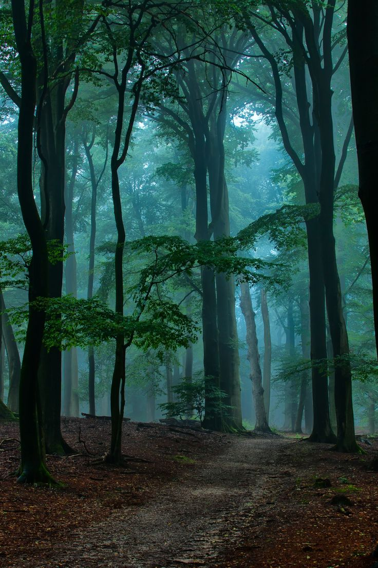 "The ""Onzalige Bossen"" on a misty morning with the sun trying hard to peep through. This is part of the natural reserve NP Veluwe Zoom in the Netherlands."