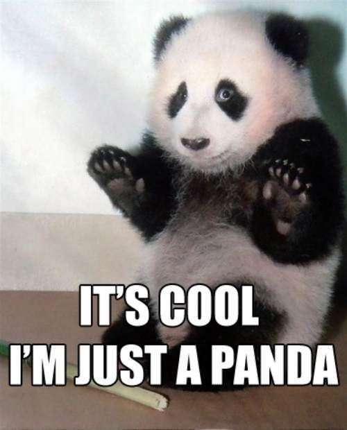 Who doesn't love pandas?