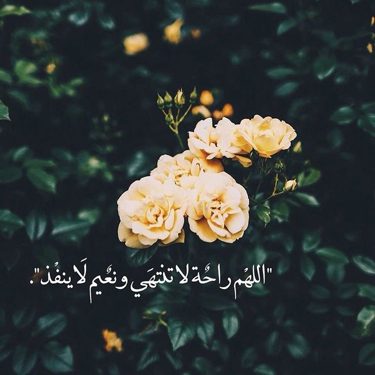اللهم  راحة لاتنتهي ونعيم لا ينفذ يارب العالمين❤