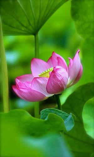 Lotus flower bomb, firefly. When I'm low, she takes me high. I could teach you all the sounds of love. <3