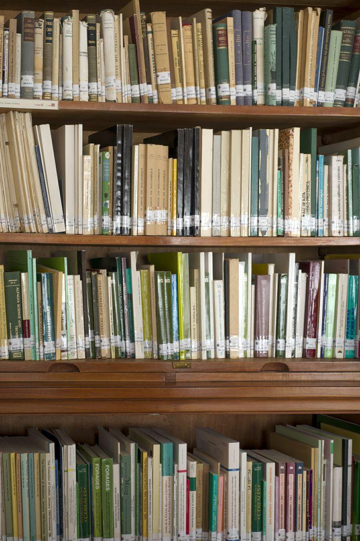 . Fondo librario. Detalle
