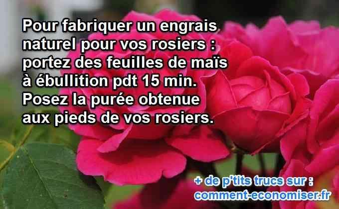 Vos rosiers manquent d'éclat ? Ils ont besoin d'un engrais naturel ? Cet engrais existe. Il est 100% écologique et économique.  Découvrez l'astuce ici : http://www.comment-economiser.fr/engrais-rosiers-fleurs-mais.html?utm_content=bufferb012a&utm_medium=social&utm_source=pinterest.com&utm_campaign=buffer