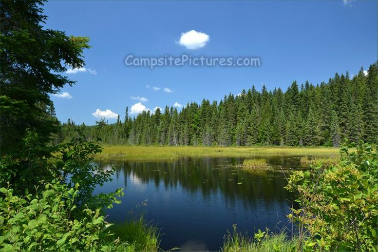 Algonquin Park Trails, Camping in Ontario, Track and Tower side trail #algonquinpark