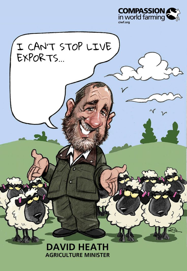 Our original caricature of David Heath, Minister for Agriculture #stopliveexports