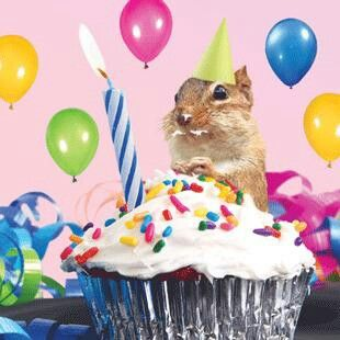 Birthday squirrel