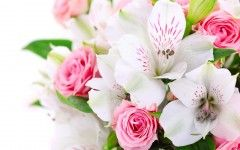 Beautiful Flowers Cool Wallpapers