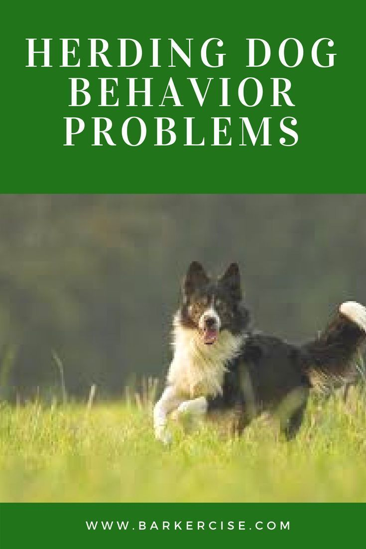 Pin By Katrina Oldham On Animals In 2020 Herding Dogs Breeds Herding Dogs Border Collie Puppy Training