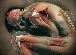 Deze maand zijn er uitkomsten vantwee nieuwe fibromyalgiestudies.Bij een studie werden deeffecten van een magnesiumspray bij fibromyalgieklachten onderzocht. Uitde andere studie blijkt matig alc…