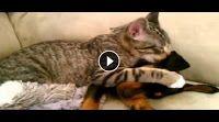 Il mondo degli animali: Il Cucciolo di Golden Retriever ed il Sedano