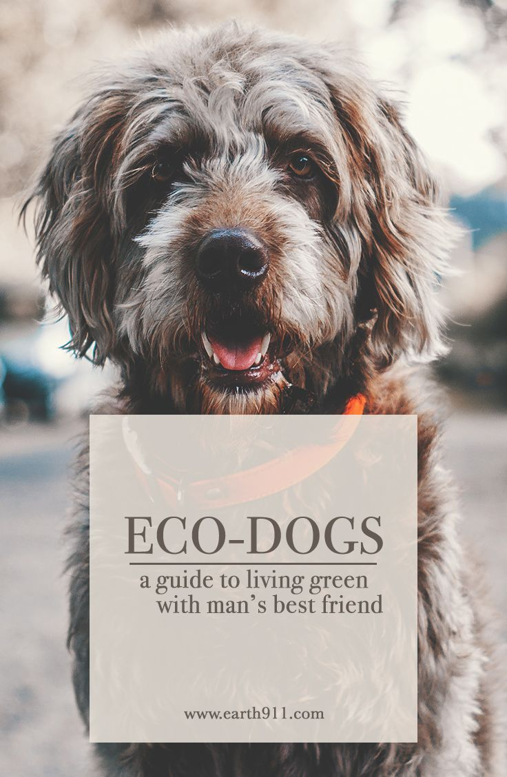 A guide to living green with your dog.   http://earth911.com/living-well-being/green-dog-owner-guide/