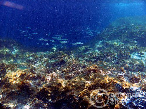 in fondo al mare / under the sea