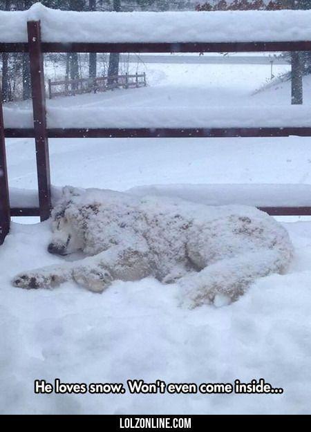 He Loves Snow. He Won't Even Come Inside...#funny #lol #lolzonline