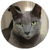 Cat Health Insurance for Accident & Illness - Trupanion