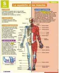 Le squelette et les muscles - Mon Quotidien, le seul site d'information quotidienne pour les 10 - 14 ans !