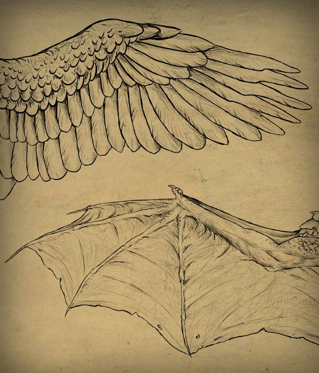 Final Image - Taking Flight: A Beginner's Guide Into Drawing Wings