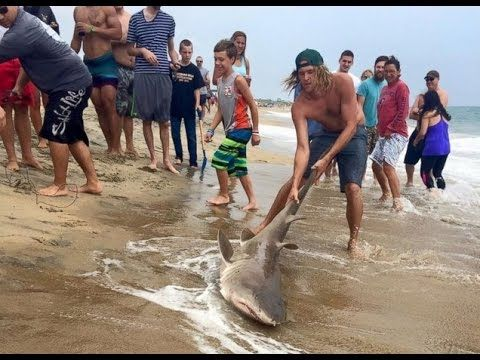 Video Shows Men Catching Shark Off Coast of North Carolina