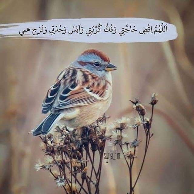 Pin By فلسطينية ولي الفخر On رجوتك ربي فأحسن رجائي With Images Animals Birds