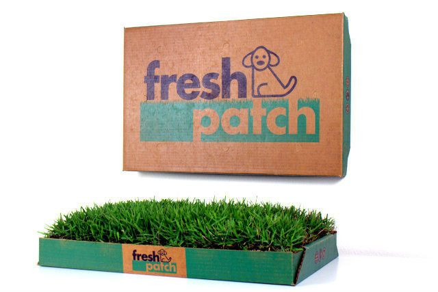 Fresh Patch Standard Dog Potty with Real Grass