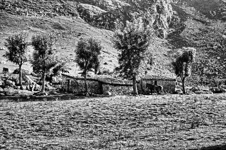 Asturian black and white -