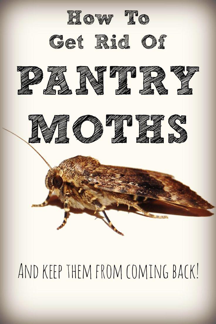The 25+ best Pantry moths ideas on Pinterest   Moth repellent, Get ...