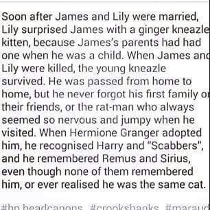 In Lily's letter to Sirius, she mentions how Harry nearly killed the cat with the toy broom that Sirius got him. Well, what if that's the reason that Crookshanks has a squashed head and a flat face?