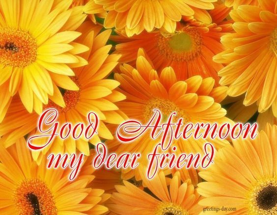 Good Afternoon My Dear Friend afternoon good afternoon good afternoon quotes good afternoon images noon quotes afternoon greetings