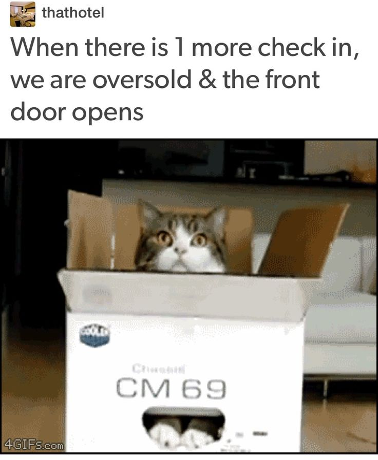 16 Cats Reacting To Cosmo Advice Hotel humor, Work humor