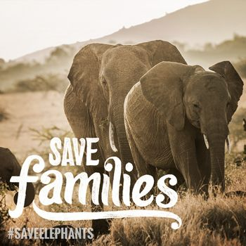 Help us reduce the demand of selling and trading of illegal ivory. The Nature Conservancy - #SaveElephants
