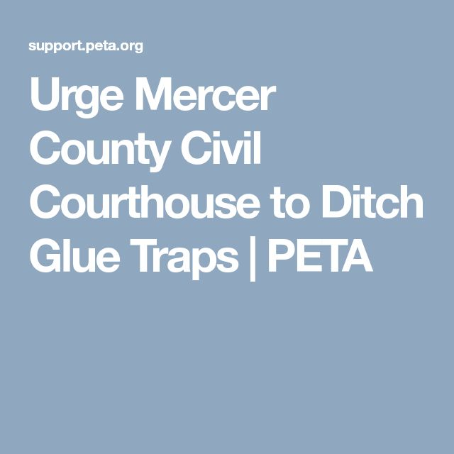 Urge Mercer County Civil Courthouse to Ditch Glue Traps | PETA