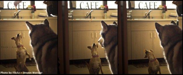 Animali domestici e i loro benefici. Cani e gatti migliorano lo status mentale e fisico di tutta la famiglia