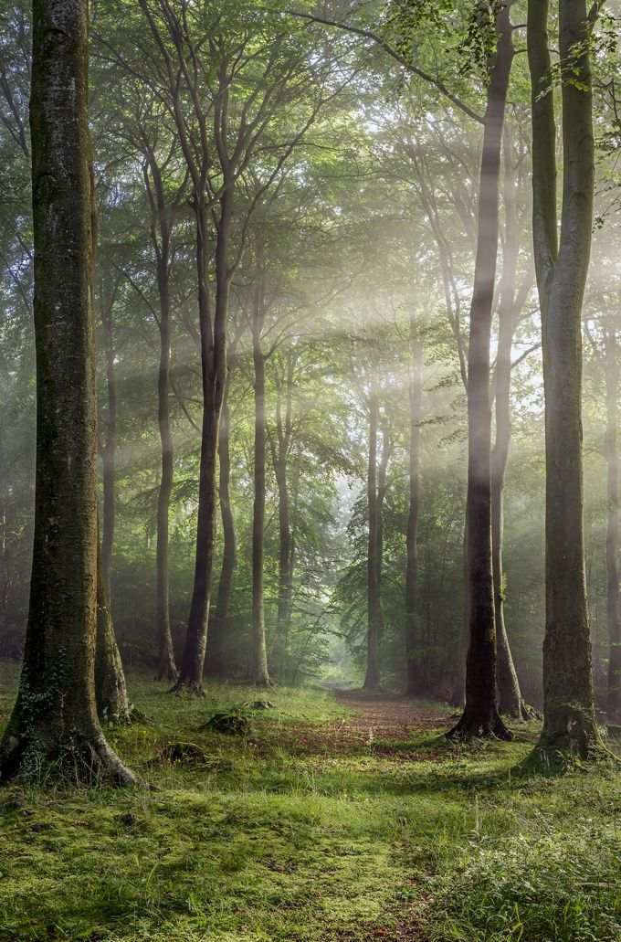 Buckholt Wood, Cranham, Gloucestershire © Robert Wolstenholme
