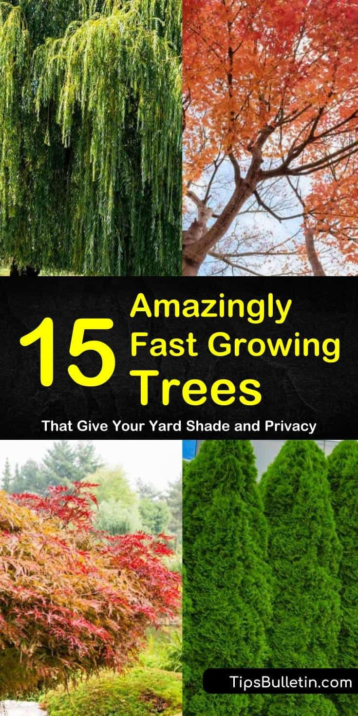 15 Amazingly Fast Growing Trees That Give Your Yard Shade And