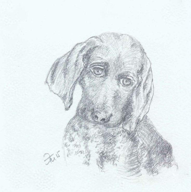 Elzati (Ольга Удовенко) - собака. Карандаш