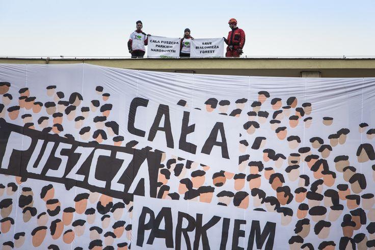 """12 kwietnia aktywistki i aktywiści Greenpeace, w imieniu wszystkich Obrońców Puszczy, wspięli się na Ministerstwo Środowiska i rozwinęli baner z hasłem """"Cała Puszcza parkiem narodowym"""". W ten sposób apelują o jedyny skuteczny ratunek dla Puszczy Białowieskiej: objęcie całego jej obszaru parkiem narodowym. www.kochampuszcze.pl  #bialowieza #białowieża #forest #action #puszczabialowieska"""