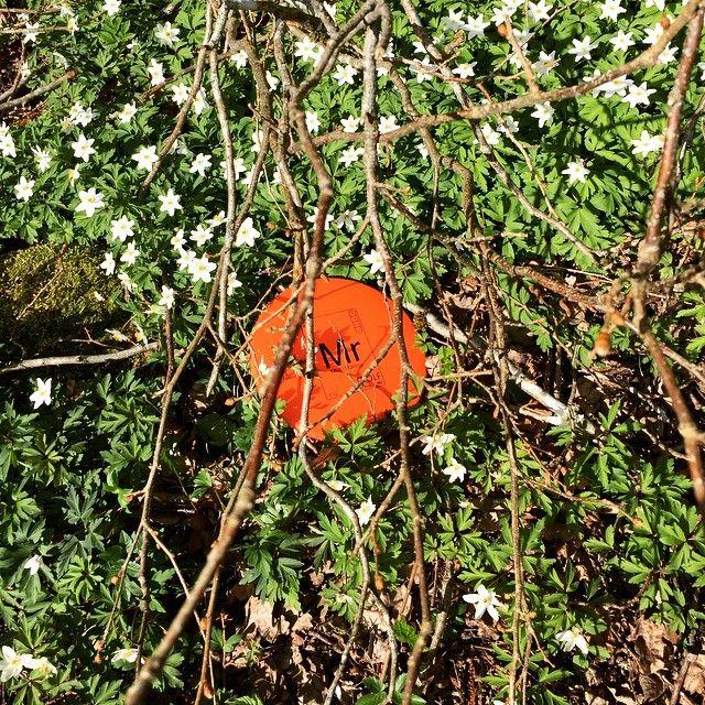 Känns som om våren är här ☁️ trotsa vädret och ta en runda frolf idag! #frolfnu #frolf #discgolf #discgolfsweden #frisbeegolf
