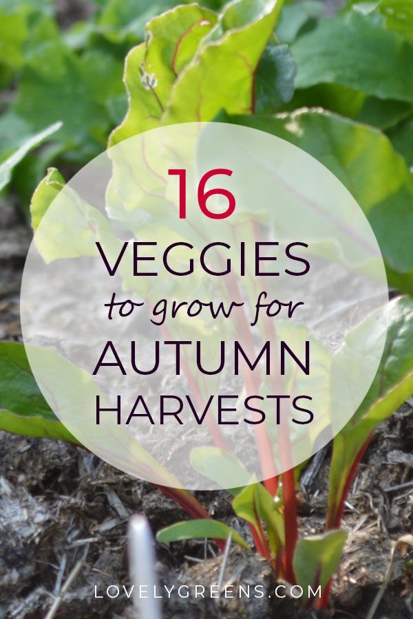 What To Plant For Autumn Harvests Fall Harvest Growing