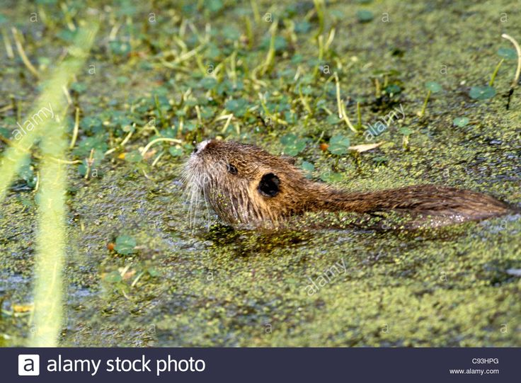 12+ What animals live in swamps ideas