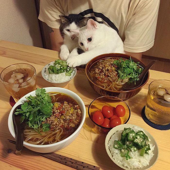 ネコと囲む食卓                                                       …