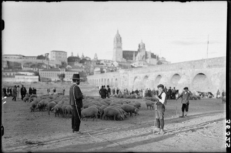 """Antigua feria de ganado en el Puente Romano de #Salamanca """"En la feria de #cerdos"""", tomada por Antonio Passaporte alrededor de 1927."""