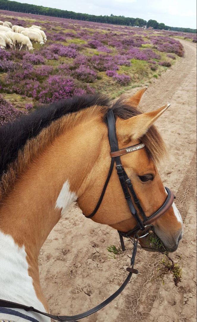 Pin By Emma Louise Desplancke On A N I M A L S Horses Cute Horses Horse Life
