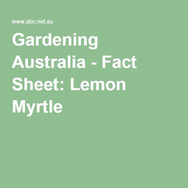 Gardening Australia - Fact Sheet: Lemon Myrtle