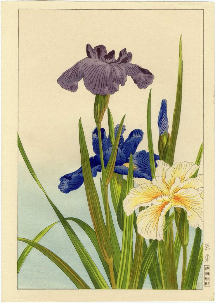 Nishimura Hodo Japanese Woodblock Print Iris Original 1938 Printing | eBay