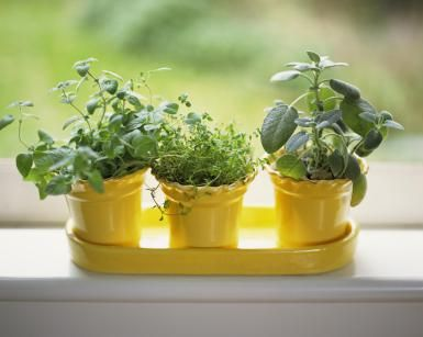 How to Grow an Indoor Herb Garden on a Windowsill