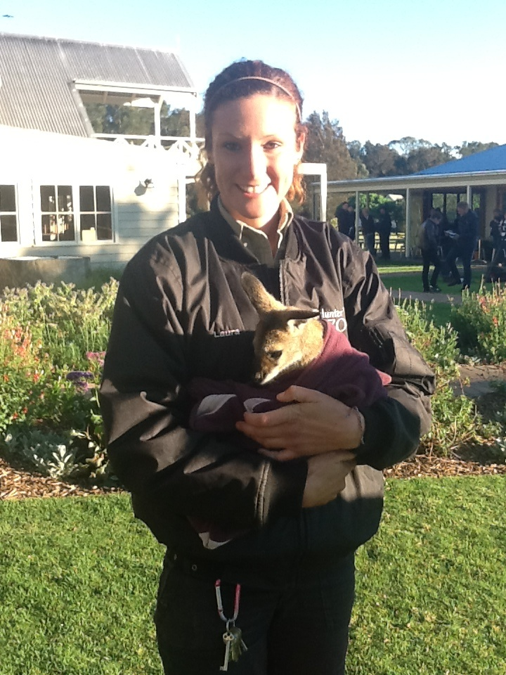 Cute little joey from the Hunter Valley Zoo