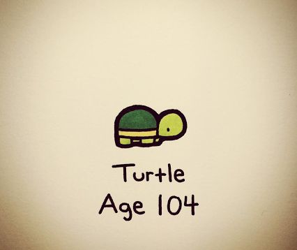 turtle wayne - Google Search