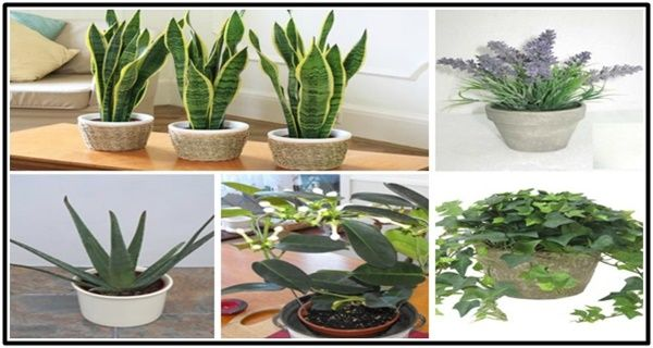 5 Plants For Your Bedroom To Help You Sleep Better And Purify Your Air