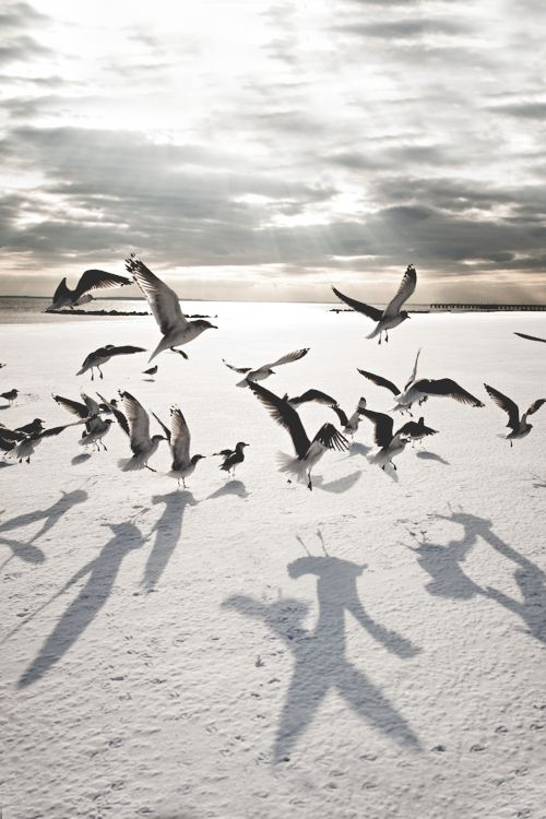 The soundtrack of my summer must always include the symphony of cawing seagulls.